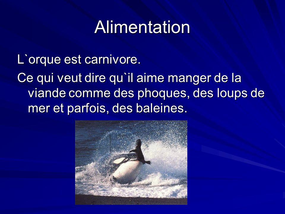 Alimentation L`orque est carnivore. Ce qui veut dire qu`il aime manger de la viande comme des phoques, des loups de mer et parfois, des baleines.