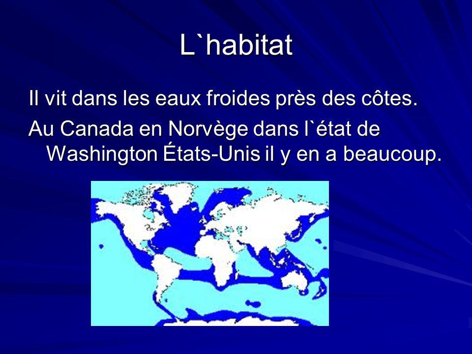L`habitat Il vit dans les eaux froides près des côtes. Au Canada en Norvège dans l`état de Washington États-Unis il y en a beaucoup.