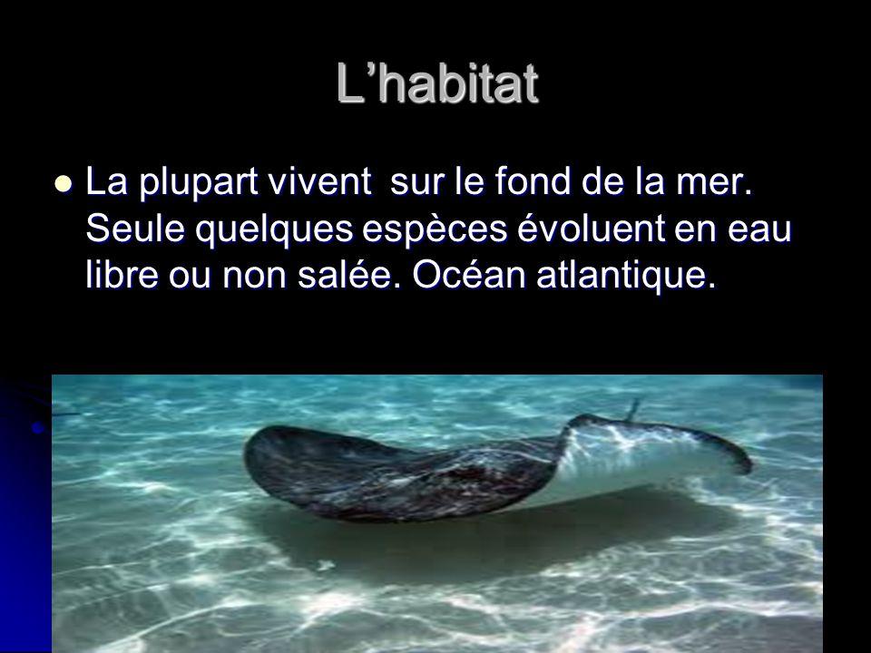 Lhabitat La plupart vivent sur le fond de la mer. Seule quelques espèces évoluent en eau libre ou non salée. Océan atlantique. La plupart vivent sur l
