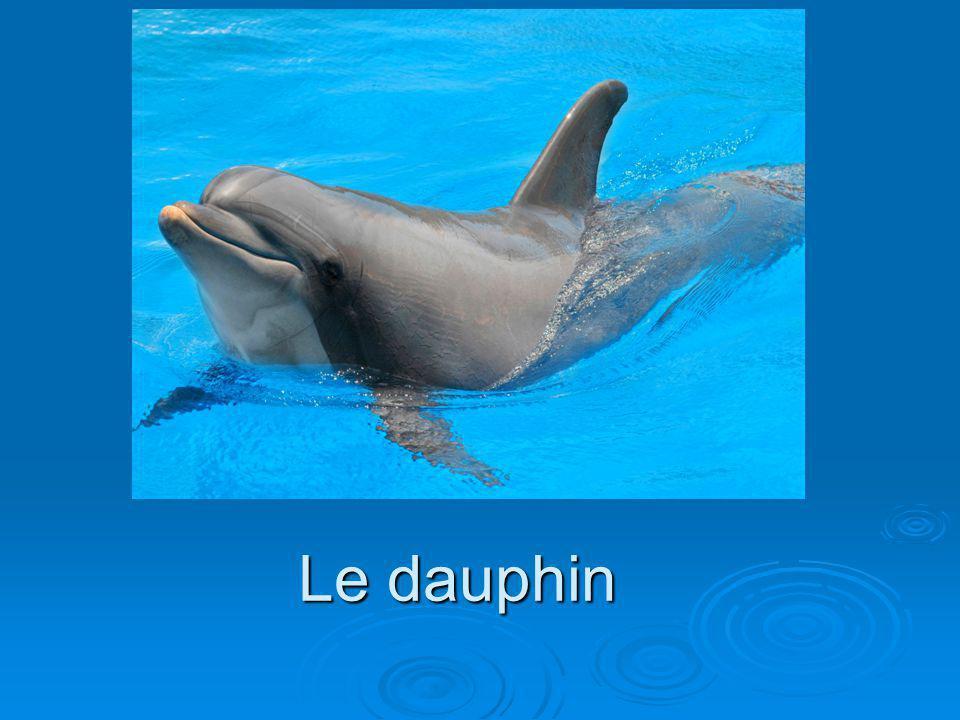 Description physique Le dauphin pèse de 75 kg à 300 kg.
