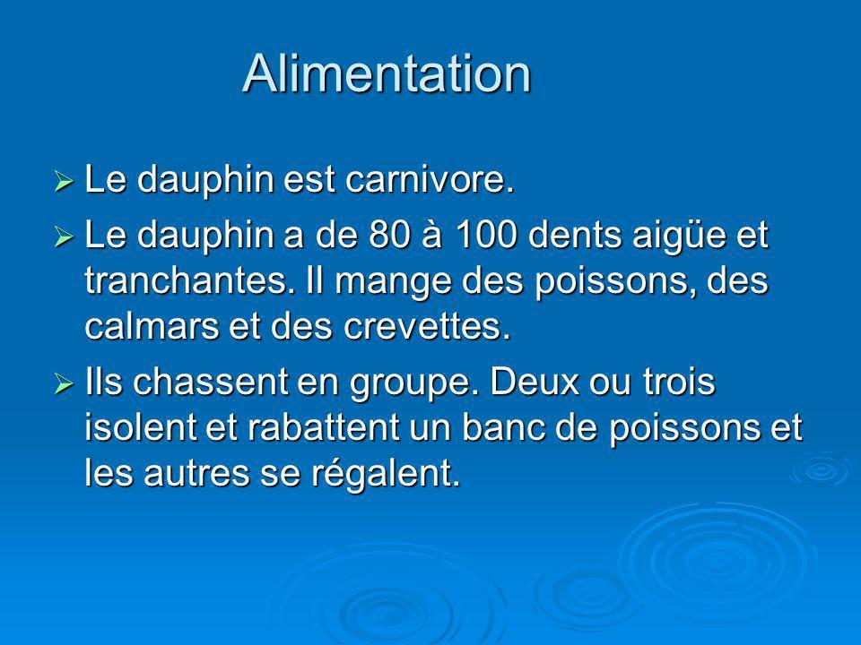 Alimentation Le dauphin est carnivore. Le dauphin est carnivore. Le dauphin a de 80 à 100 dents aigüe et tranchantes. Il mange des poissons, des calma