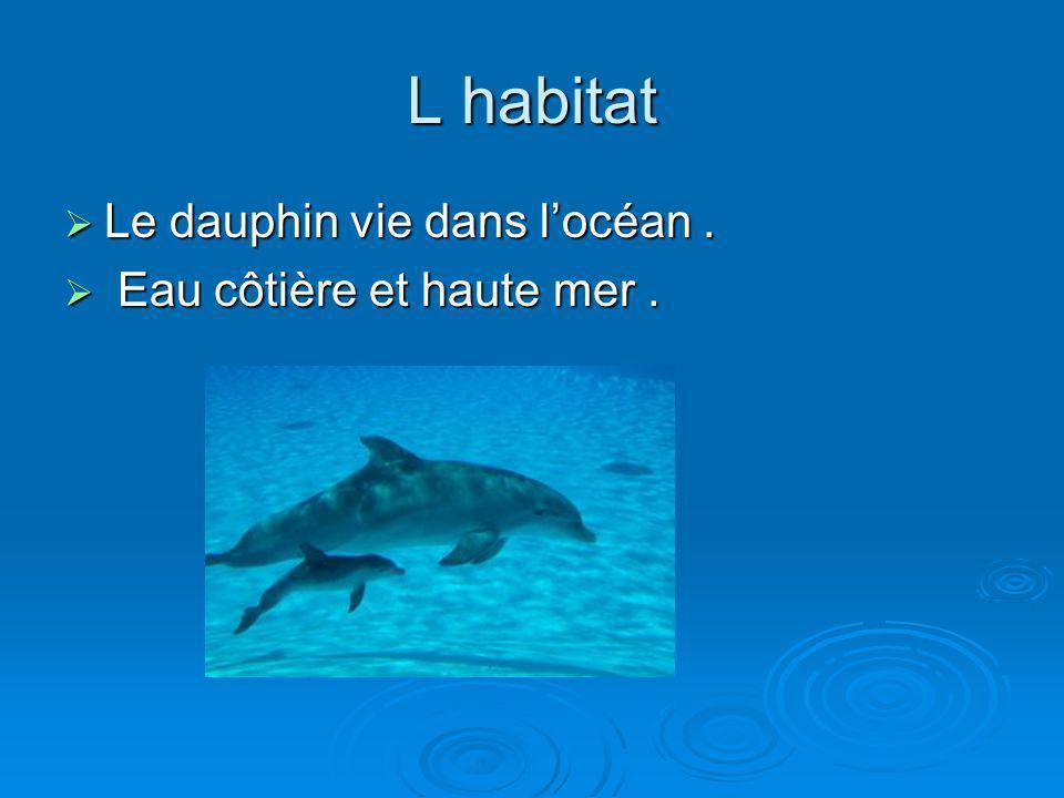 L habitat Le dauphin vie dans locéan. Le dauphin vie dans locéan. Eau côtière et haute mer. Eau côtière et haute mer.
