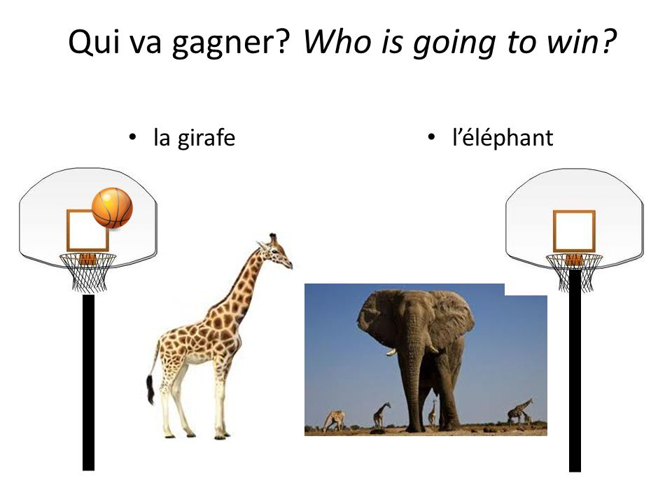 la girafe léléphant Qui va gagner? Who is going to win?