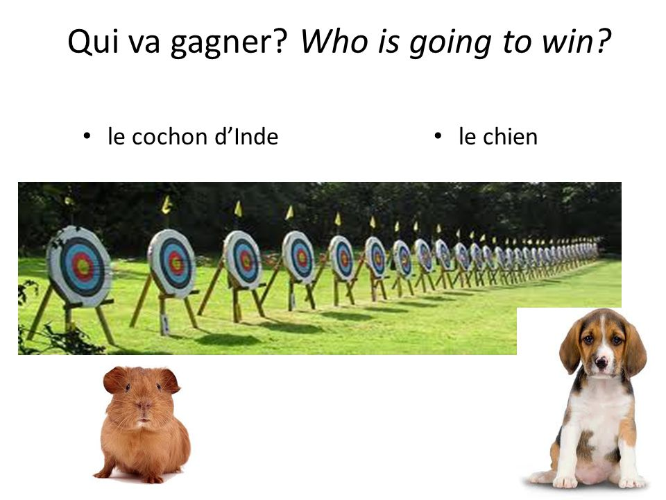 le cochon dInde le chien Qui va gagner Who is going to win