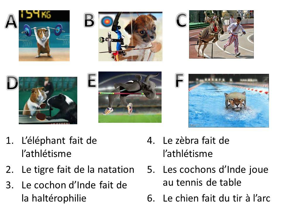 1.Léléphant fait de lathlétisme 2.Le tigre fait de la natation 3.Le cochon dInde fait de la haltérophilie 4.Le zèbra fait de lathlétisme 5.Les cochons dInde joue au tennis de table 6.Le chien fait du tir à larc