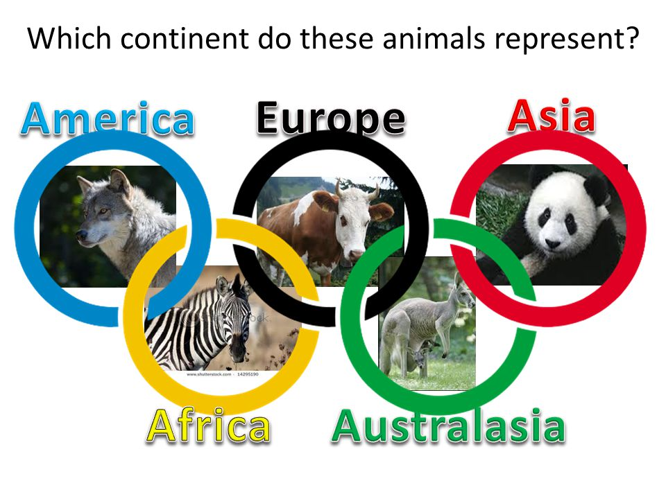Which continent do these animals represent?
