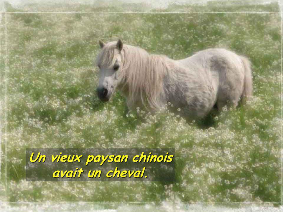 Un vieux paysan chinois avait un cheval.