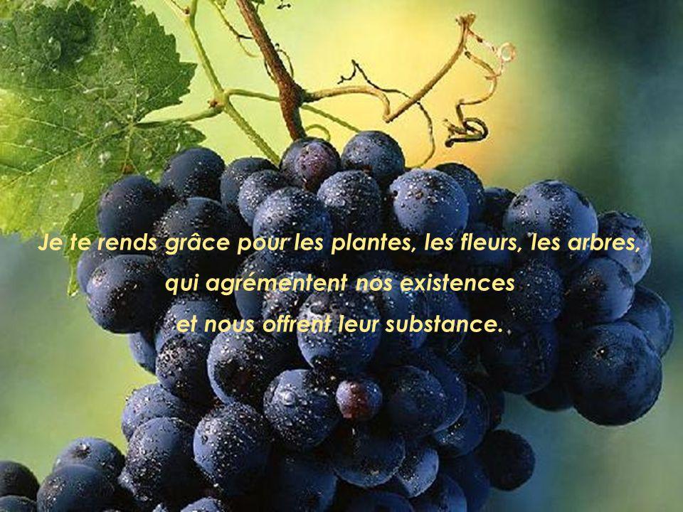 Je te rends grâce pour les plantes, les fleurs, les arbres, qui agrémentent nos existences et nous offrent leur substance.