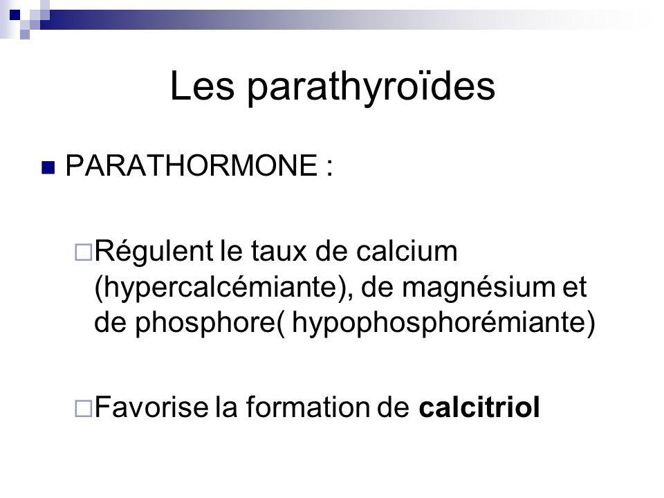 Les parathyroïdes PARATHORMONE : Régulent le taux de calcium (hypercalcémiante), de magnésium et de phosphore( hypophosphorémiante) Favorise la format