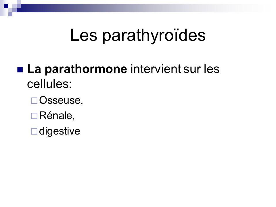 Les parathyroïdes La parathormone intervient sur les cellules: Osseuse, Rénale, digestive