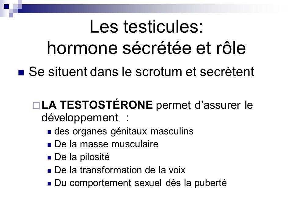 Les testicules: hormone sécrétée et rôle Se situent dans le scrotum et secrètent LA TESTOSTÉRONE permet dassurer le développement : des organes génita
