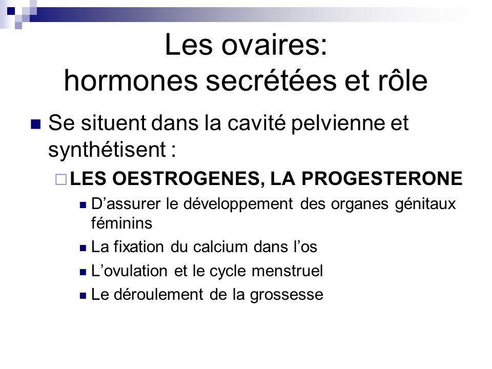Les ovaires: hormones secrétées et rôle Se situent dans la cavité pelvienne et synthétisent : LES OESTROGENES, LA PROGESTERONE Dassurer le développeme