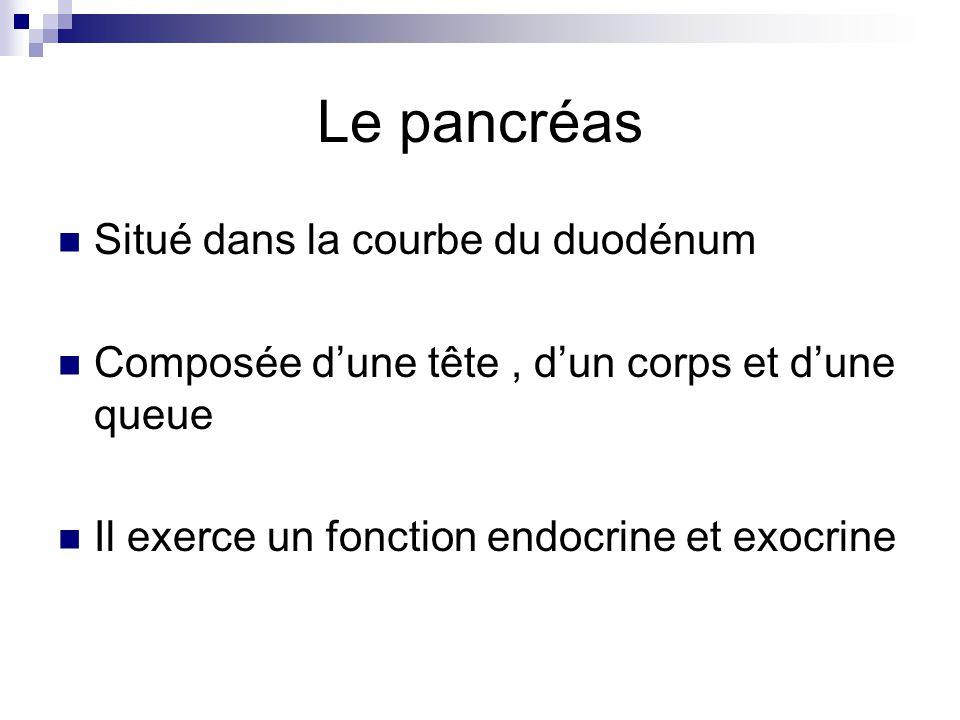Le pancréas Situé dans la courbe du duodénum Composée dune tête, dun corps et dune queue Il exerce un fonction endocrine et exocrine