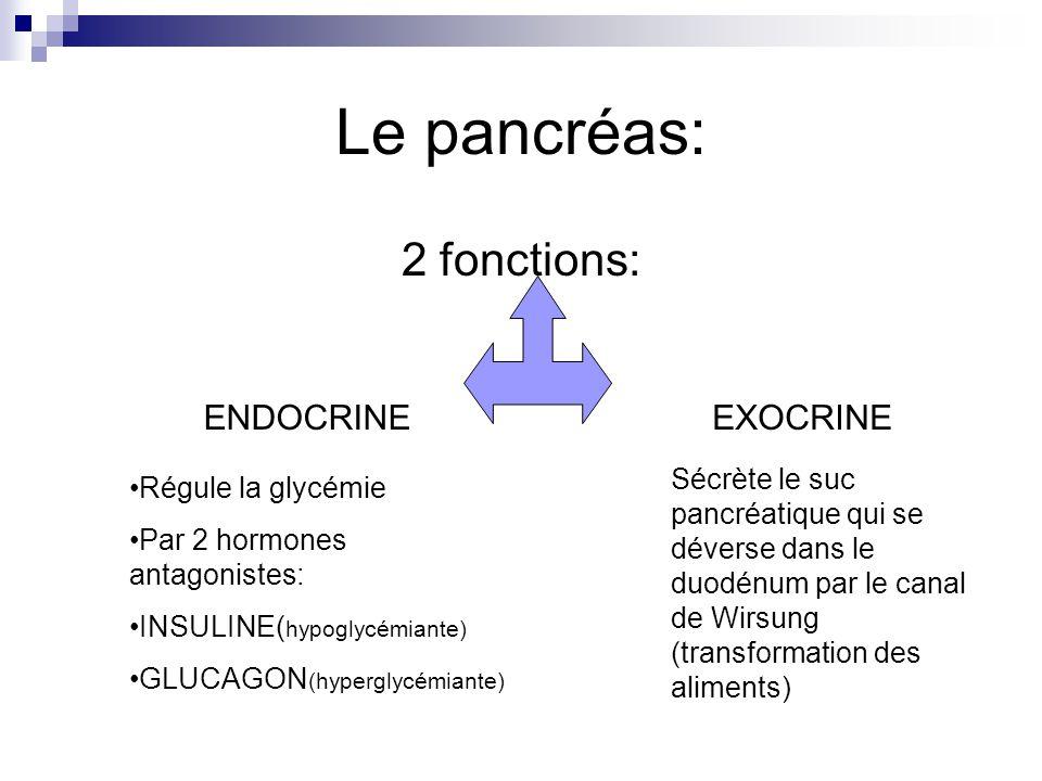 Le pancréas: 2 fonctions: ENDOCRINEEXOCRINE Régule la glycémie Par 2 hormones antagonistes: INSULINE( hypoglycémiante) GLUCAGON (hyperglycémiante) Séc
