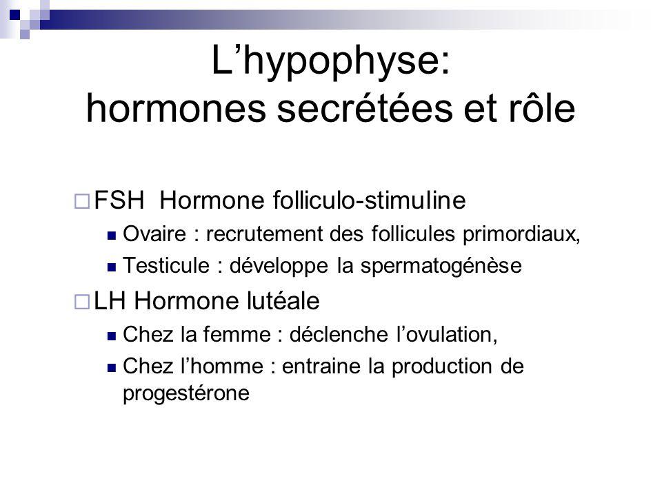 FSH Hormone folliculo-stimuline Ovaire : recrutement des follicules primordiaux, Testicule : développe la spermatogénèse LH Hormone lutéale Chez la fe