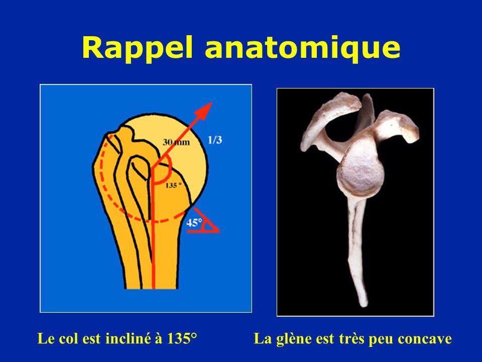 Biceps Sous-scapulaire Rappel anatomique