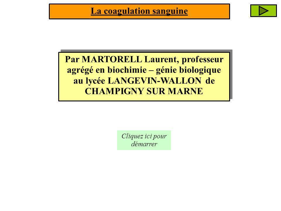 Par MARTORELL Laurent, professeur agrégé en biochimie – génie biologique au lycée LANGEVIN-WALLON de CHAMPIGNY SUR MARNE Cliquez ici pour démarrer La coagulation sanguine