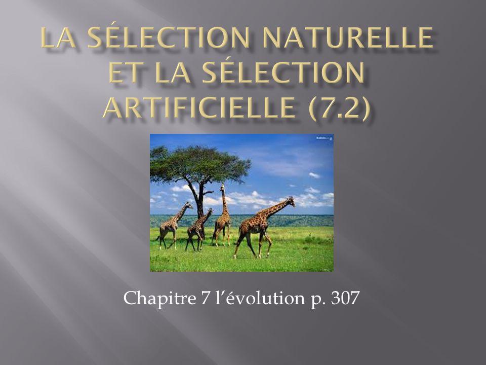 Chapitre 7 lévolution p. 307