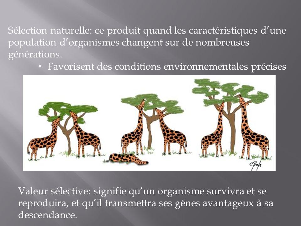 Pression sélective: Des conditions environnementales qui sélectionnent en faveur de certaines caractéristiques dindividus et qui sélectionnent en défaveur dautres caractéristiques.
