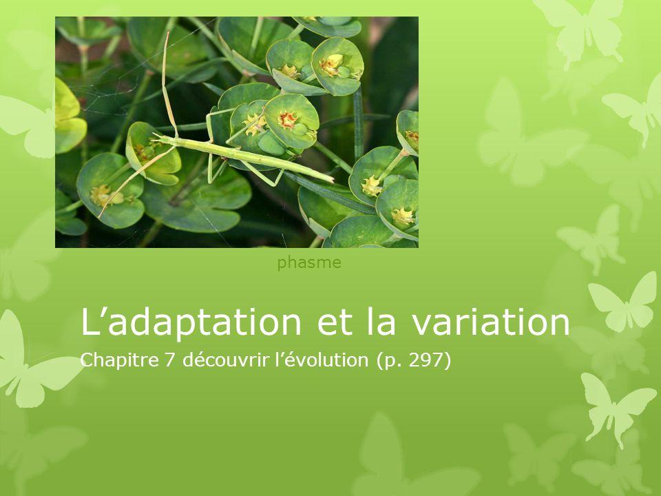 Ladaptation et la variation Chapitre 7 découvrir lévolution (p. 297) phasme