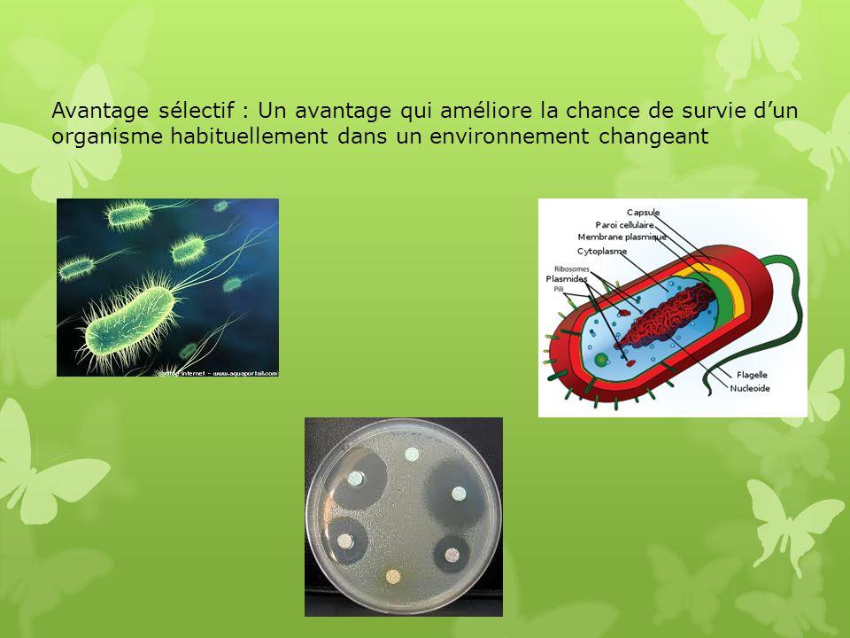 Avantage sélectif : Un avantage qui améliore la chance de survie dun organisme habituellement dans un environnement changeant