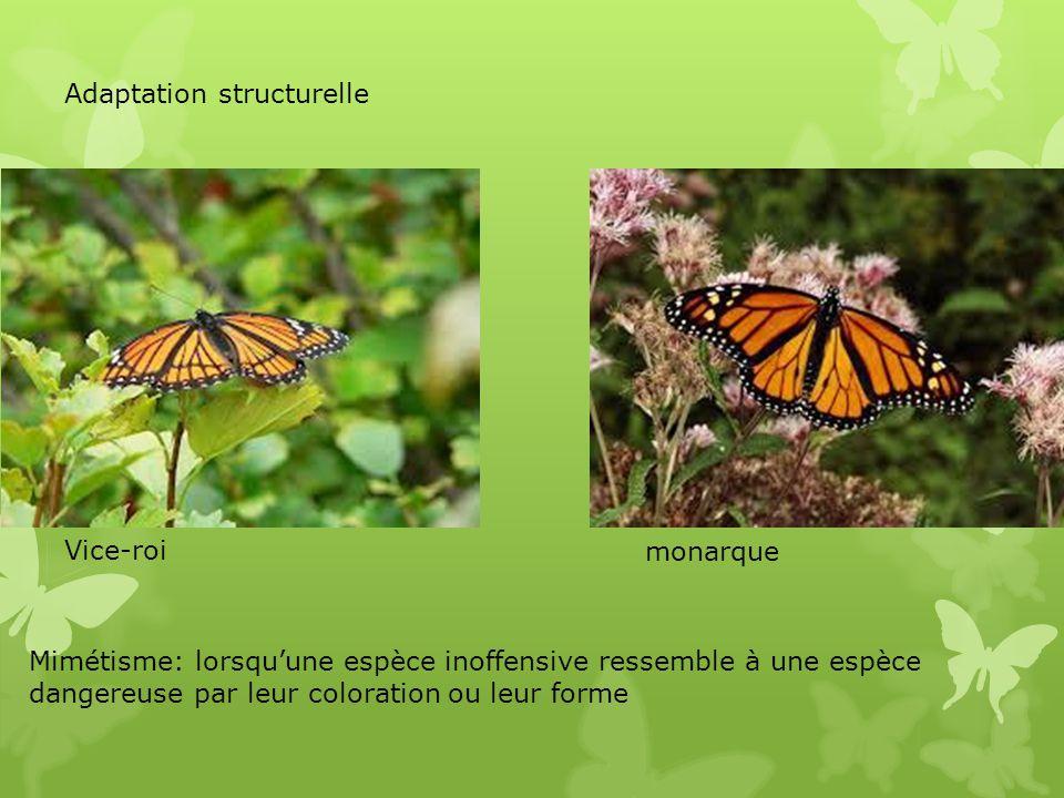 Adaptation structurelle Vice-roi monarque Mimétisme: lorsquune espèce inoffensive ressemble à une espèce dangereuse par leur coloration ou leur forme