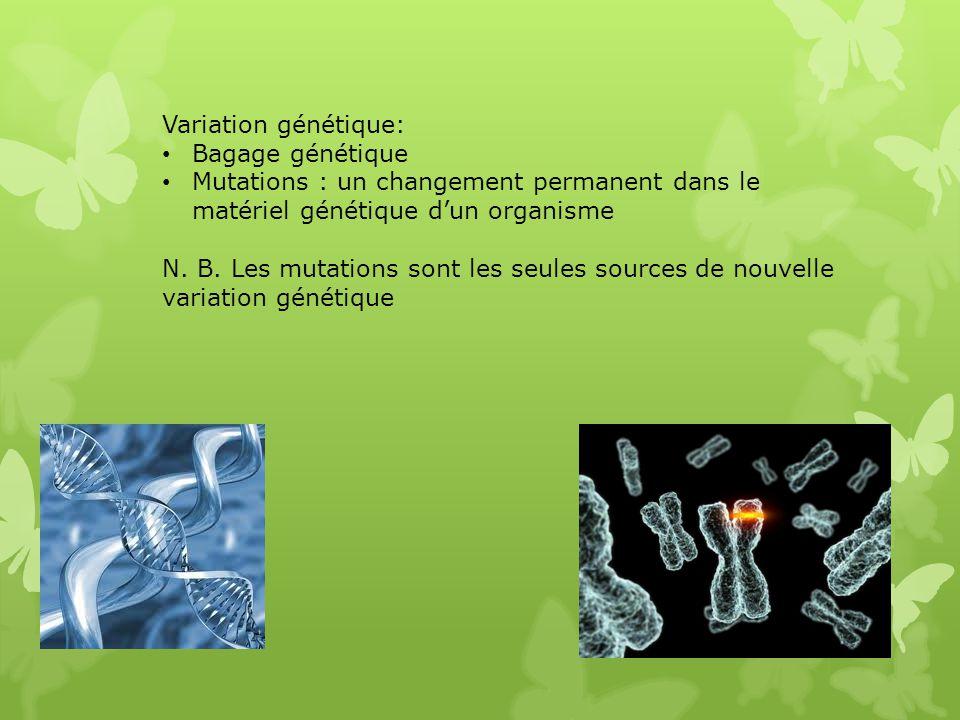 Variation génétique: Bagage génétique Mutations : un changement permanent dans le matériel génétique dun organisme N. B. Les mutations sont les seules