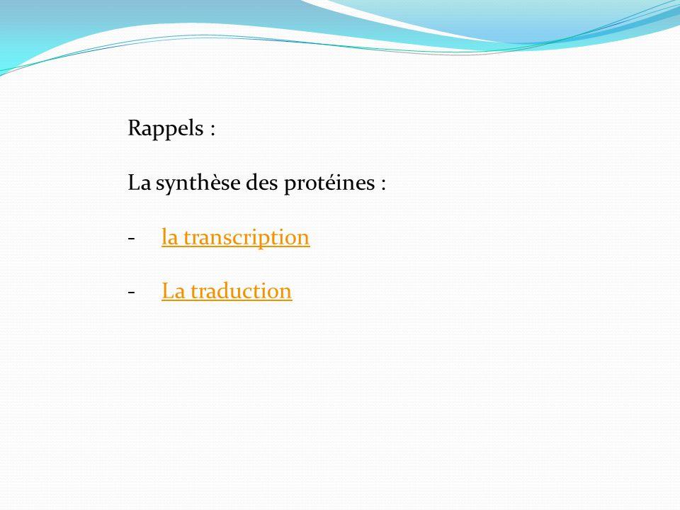 Rappels : La synthèse des protéines : -la transcriptionla transcription -La traductionLa traduction