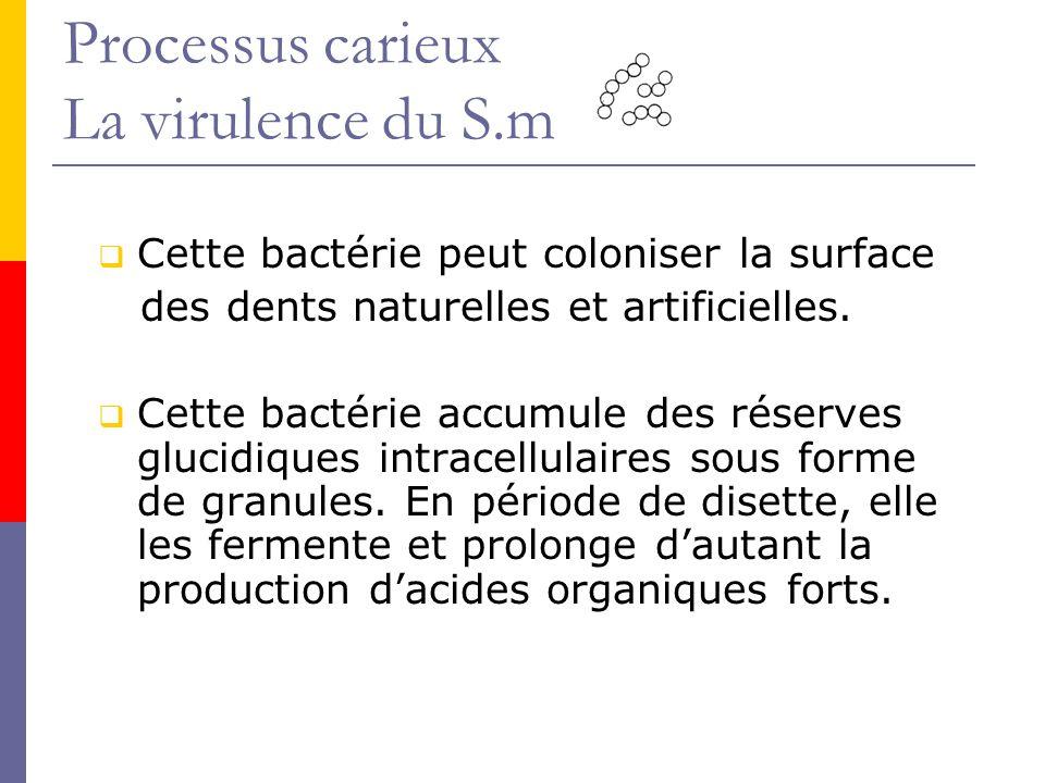 Processus carieux La virulence du S.m Cette bactérie peut coloniser la surface des dents naturelles et artificielles.