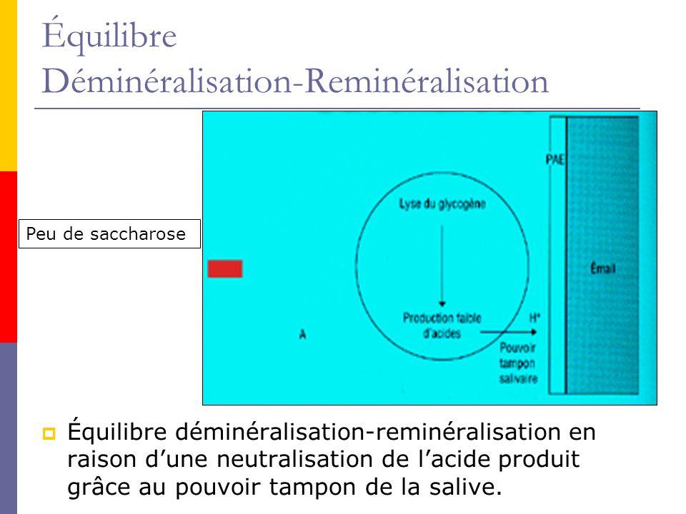Équilibre Déminéralisation-Reminéralisation Équilibre déminéralisation-reminéralisation en raison dune neutralisation de lacide produit grâce au pouvoir tampon de la salive.