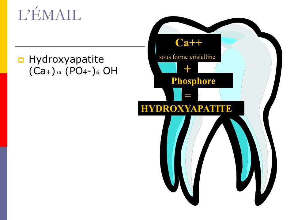 LÉMAIL Hydroxyapatite (Ca + ) 10 (PO 4 -) 6 OH Ca++ sous forme cristalline + Phosphore = HYDROXYAPATITE