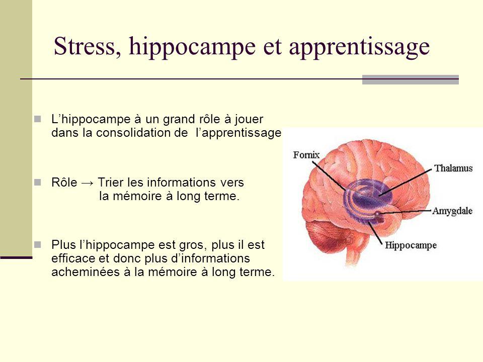 Stress, hippocampe et apprentissage Lhippocampe à un grand rôle à jouer dans la consolidation de lapprentissage. Rôle Trier les informations vers la m