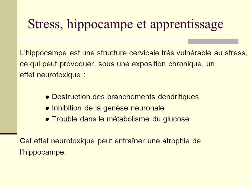 Stress, hippocampe et apprentissage Lhippocampe est une structure cervicale très vulnérable au stress, ce qui peut provoquer, sous une exposition chro
