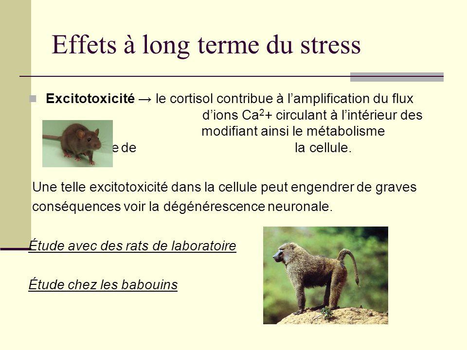 Effets à long terme du stress Excitotoxicité le cortisol contribue à lamplification du flux dions Ca 2 + circulant à lintérieur des neurones modifiant
