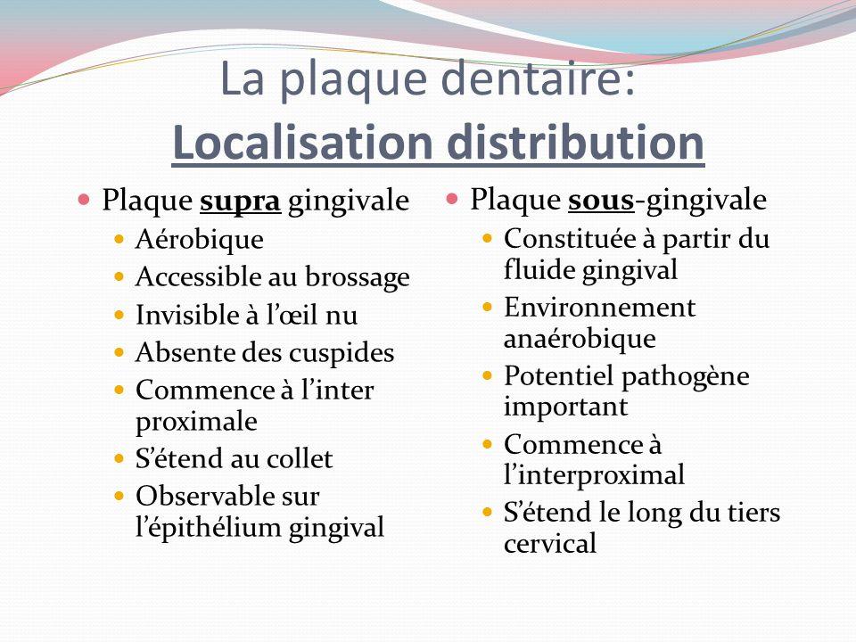 La plaque dentaire spécifique Plaque cariogénique Associée à la carie dentaire Lalimentation riche en sucre est un facteur essentiel Plaque parodontop