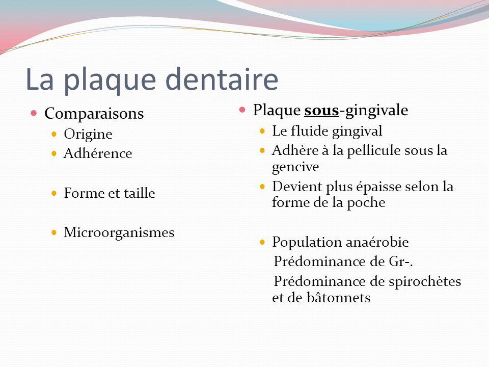 La plaque dentaire Comparaisons Origine Adhérence Rétention distribution Plaque supra gingivale Glycoprotéines Se fixe solidement Surfaces rugueuses,