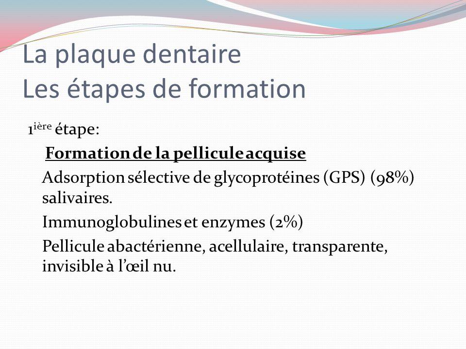 La plaque dentaire La matrice interbactérienne Contenu inorganique. Ce sont les substances minérales de la salive qui vont se retrouver dans la matric