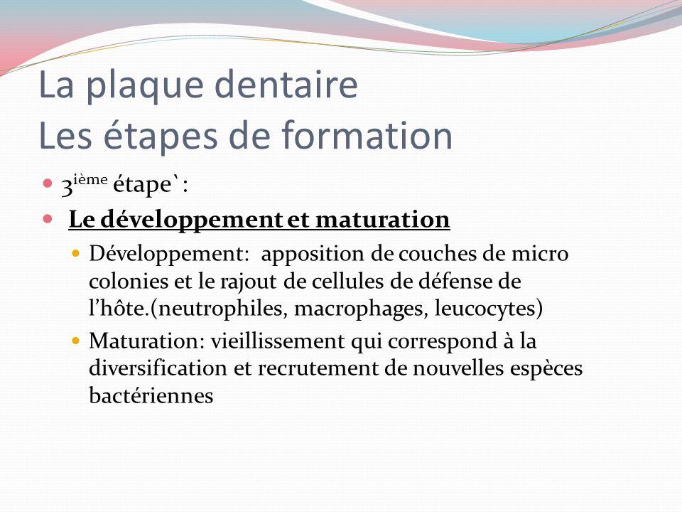 La plaque dentaire les étapes de formation 2 ième étape: La colonisation bactérienne Ladhérence se réalise grâce aux interactions bactériennes spécifi