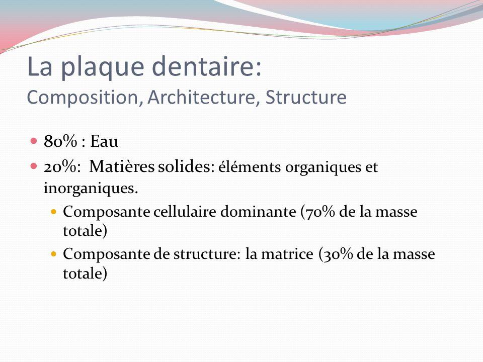 La plaque dentaire et le métabolisme Les produits métabolisés Lénergie libérée lors du catabolisme (réaction de dégradation) est mise en réserve dans