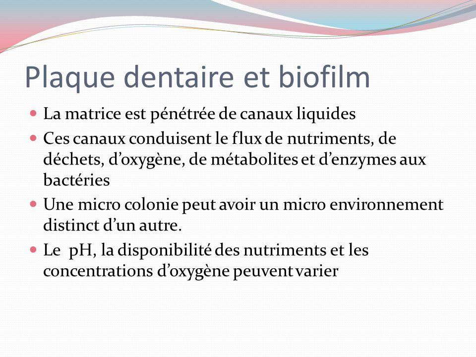 Plaque dentaire et biofilm Une organisation en micro colonies Un réseau de communication Des micro colonies entourées dune matrice protectrice Un envi