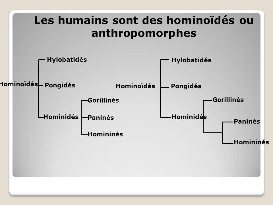 Hylobatidés Hominoïdés Hominidés Homininés Paninés Gorillinés Pongidés Hominoïdés Hylobatidés Pongidés Hominidés Gorillinés Paninés Homininés Les humains sont des hominoïdés ou anthropomorphes