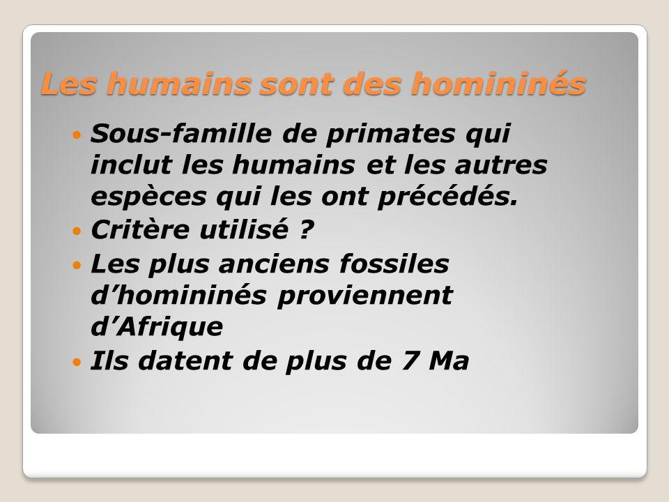 Les humains sont des homininés Sous-famille de primates qui inclut les humains et les autres espèces qui les ont précédés.