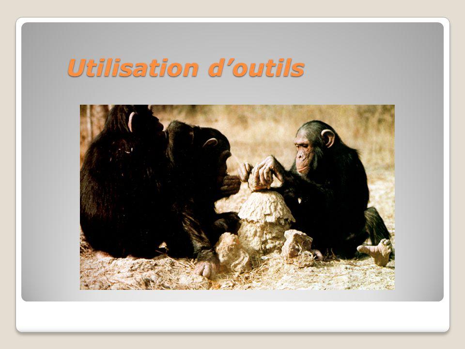 Utilisation doutils