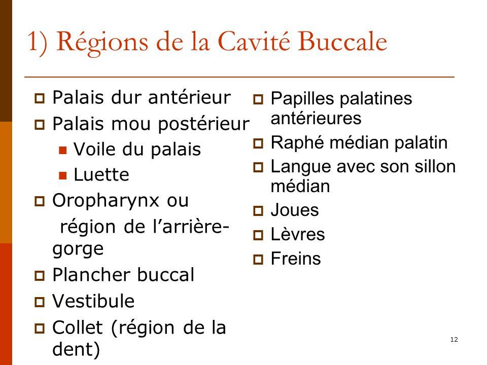 12 1) Régions de la Cavité Buccale Palais dur antérieur Palais mou postérieur Voile du palais Luette Oropharynx ou région de larrière- gorge Plancher