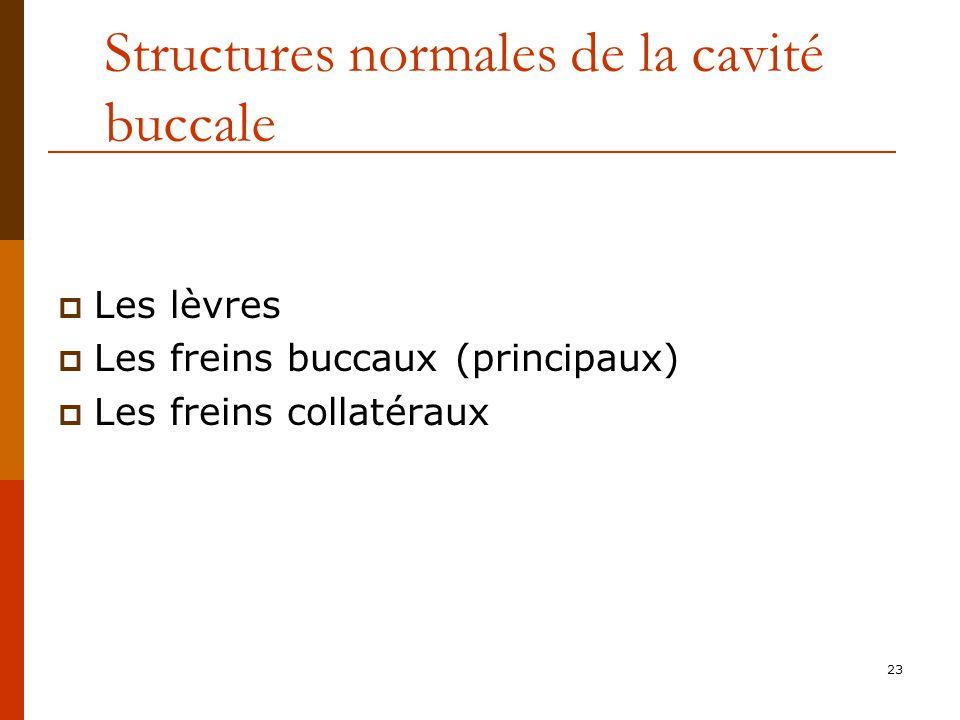 23 Structures normales de la cavité buccale Les lèvres Les freins buccaux (principaux) Les freins collatéraux