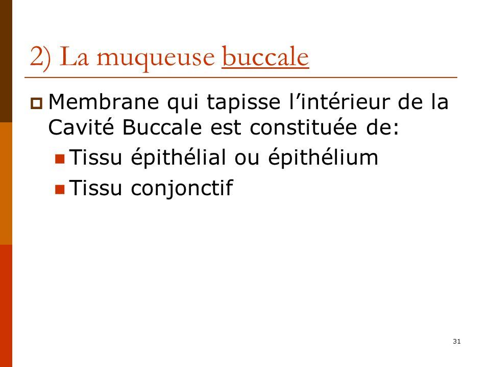 31 2) La muqueuse buccale Membrane qui tapisse lintérieur de la Cavité Buccale est constituée de: Tissu épithélial ou épithélium Tissu conjonctif