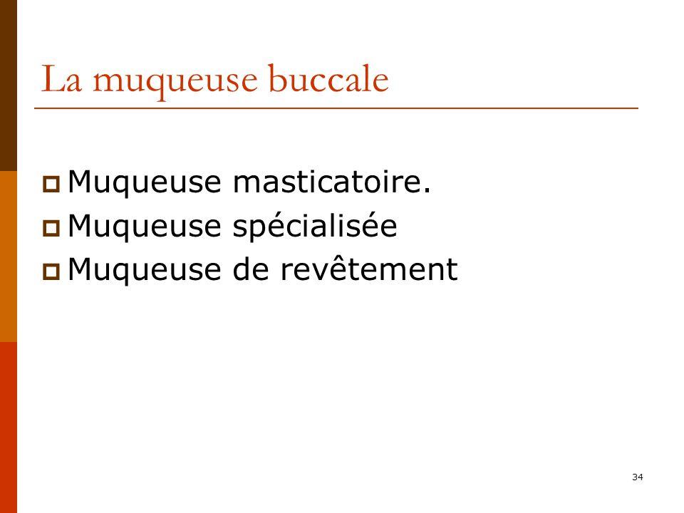 34 La muqueuse buccale Muqueuse masticatoire. Muqueuse spécialisée Muqueuse de revêtement