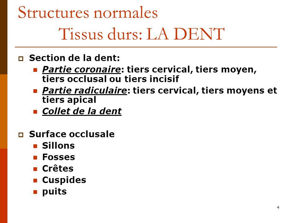 4 Structures normales Tissus durs: LA DENT Section de la dent: Partie coronaire: tiers cervical, tiers moyen, tiers occlusal ou tiers incisif Partie r