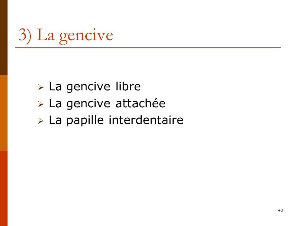40 3) La gencive La gencive libre La gencive attachée La papille interdentaire