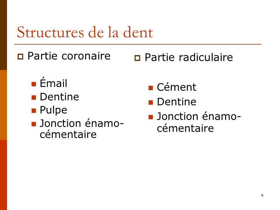 9 Structures de la dent Partie coronaire Émail Dentine Pulpe Jonction énamo- cémentaire Partie radiculaire Cément Dentine Jonction énamo- cémentaire